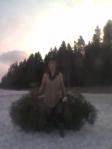 Barnens upphov, kaffesugen, släpar dubbla julgranar ur Ormestadskogen.